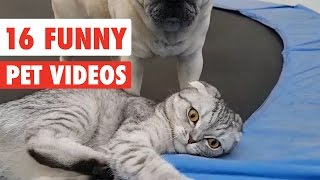 16 Funny Pets | Awesome Pet Video Compilation 2017