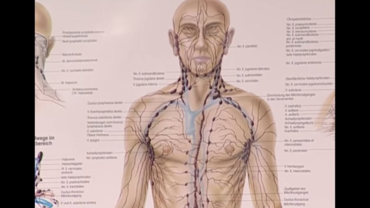 Lymphdrainage - YouTube