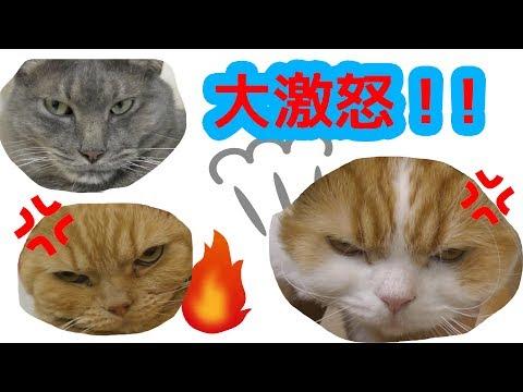 ねこさん ぜんいん 怒てる!!!