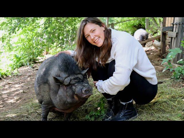 Tiere vom SCHLACHTER gerettet | Ich zeige euch einen Gnadenhof