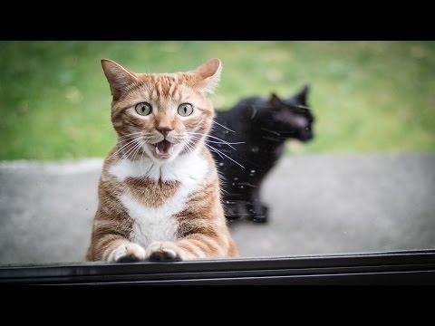 5 Интересных ФАКТОВ о Кошках
