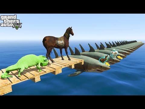 Os Animais correm na ponte tubarões Gta 5 - Animals run on the bridge with sharks