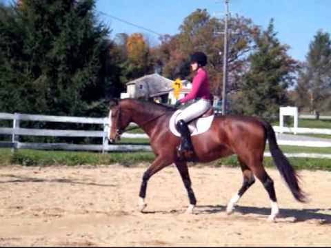 Delaware Valley College Riding Placement Video