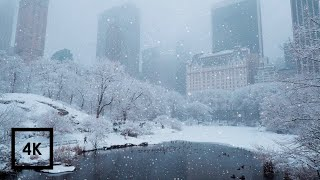 Snowfall in Central Park, New York | Walking in Central Park in the Winter Snow