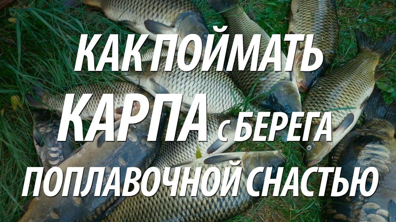 Рыбалка. Ловля карпа на горох. Carp Fishing - YouTube