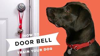How To Door Bell Train Your Dog