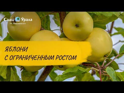 ОБЗОР КАТАЛОГА «ВЕСНА 2020»: яблони с ограниченным ростом