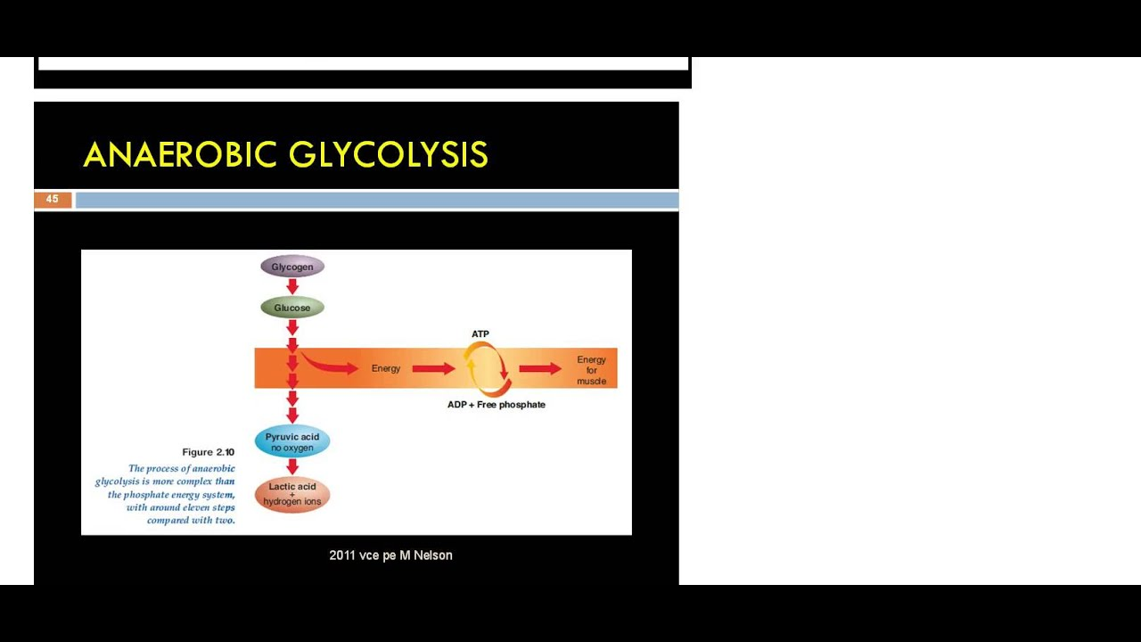 an intro into the Anaerobic Glycolysis Energy System