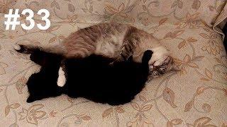 Кошки и комплекс ленивой фитнес-йоги во сне