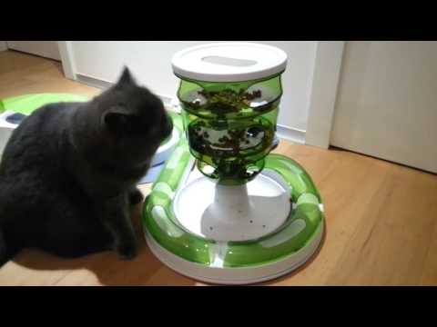 Lucas the cat playing with his Catit Senses 2.0 products