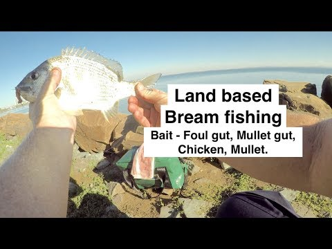 BREAM FISHING Basics, Land Based With Bait. Australia