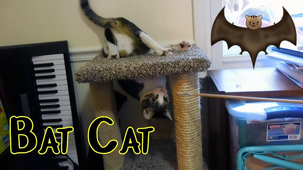 CRAZY BAT CAT 🐈 (9/24/16)