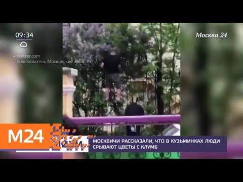 Москвичи рассказали, что в Кузьминках люди срывают цветы с клумб - Москва 24