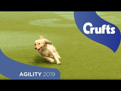 Agility - Crufts Large Novice And Medium ABC Final - Agility - Part 1 | Crufts 2019