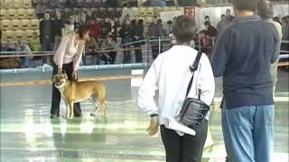 Держава 2005, Чемпионы кобели+ЛК/Derzhava 2005, Ch. males+BM