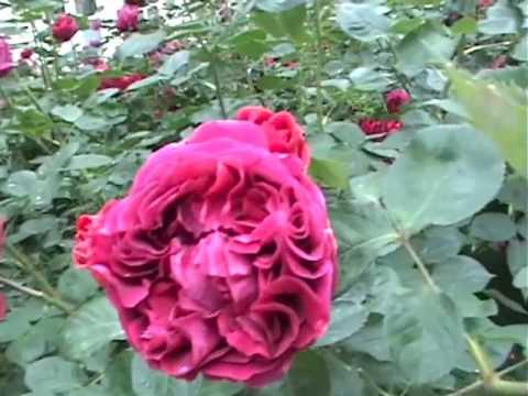 MONSTERHEART - SLEEP (official video)