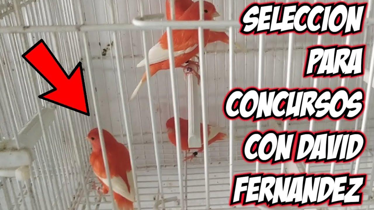 COMO SE SELECCIONA PARAJOS PARA CONCURSOS CON DAVID FERNANDEZ