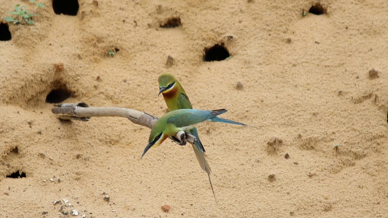 20200609金門的鳥事