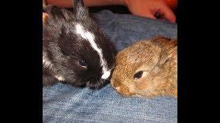 Кролиководство. Разведение кроликов. Вислоухие кролики. Практические советы. Опыт для новичков.