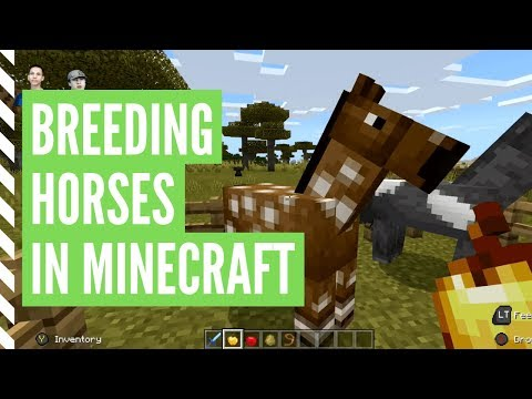 how-to-breed-horses-in-minecraft-(step-by-step)