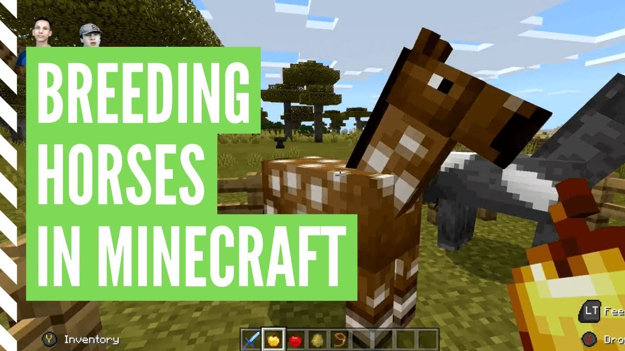 How To Breed Horses In Minecraft Step By Step Youtube