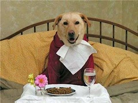 تفسير حلم رؤية اكل لحم الكلاب في المنام