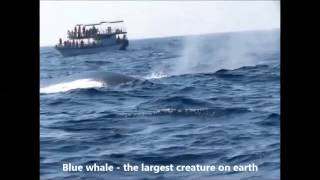 Whale and dolphin watching in Mirissa, Sri Lanka