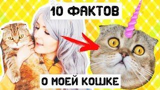 10 Забавных ФАКТОВ О МОЕЙ КОШКЕ | Наталья Кисель