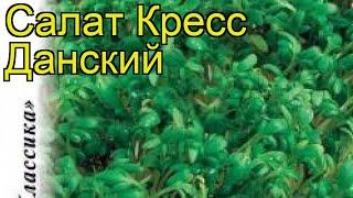Салат кресс Данский. Краткий обзор, описание характеристик, где купить семена lepidium sativum