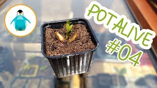 Chassis à semis, blé avec la méthode Bonfils et visite du potager Printemps 2019 - Potalive #4