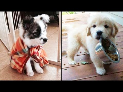 Cutest Funniest Puppies - Baby Animals And Baby Dogs | Awesome Funny Pet Animals Videos Compilation