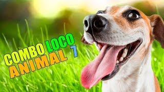 COMBO LOCO ANIMAL 7