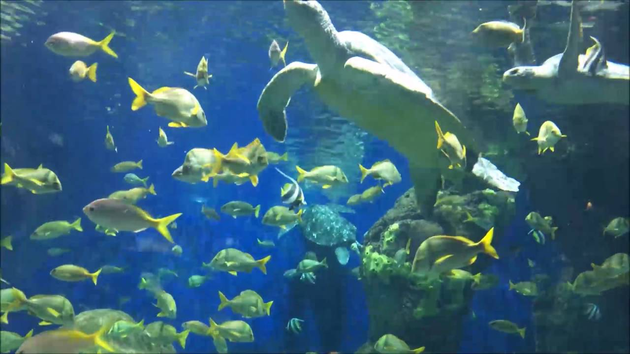Turtle Reef Aquarium SeaWorld San Diego