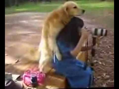 Doggy Style - Philippine Dogs from YouTube · Duration:  18 seconds