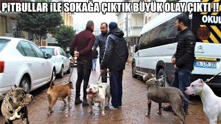 Pitbullar ile Sokağa Çıktık Olay çıktı -Kulubelerinde ÖLÜM Tehlikesi yazıyordu !!