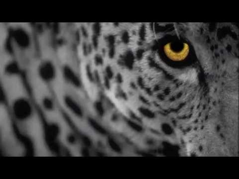 Minilogue - The Leopard (Extrawelt Remix)