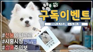 [EVENT] 시흥시청 첫 🐶인턴멍 구독이🐶와 함께하는 🎉구독 이벤트!!🎊
