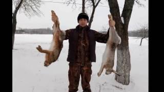 Удачная охота на зайца