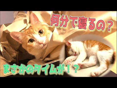 �検証】猫��風呂��る���タイムを計測��ら�����果����ww