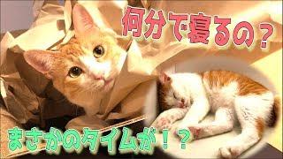 【検証】猫がお風呂で寝るまでのタイムを計測したらまさかの結果になったww