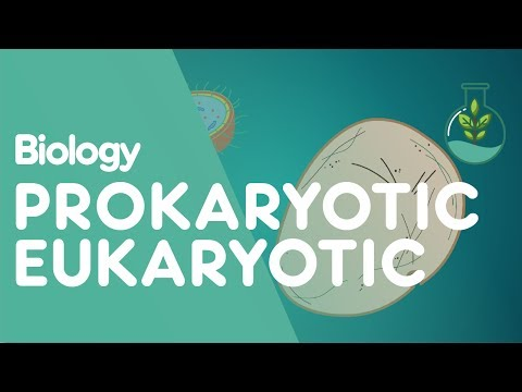 Prokaryotic vs Eukaryotic: The Differences   Biology for All   FuseSchool