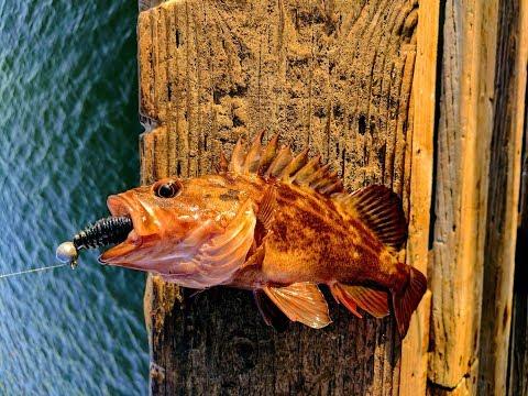 Half Moon Bay Pier Fishing For Rock Cod & Rock Crab (July 2017)