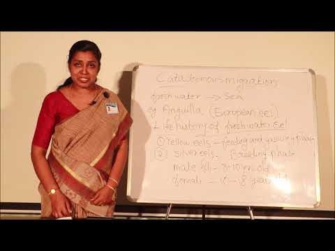 Migration In Fishes Lecture By Preethi Francis, St. Albert's College, Ernakulam