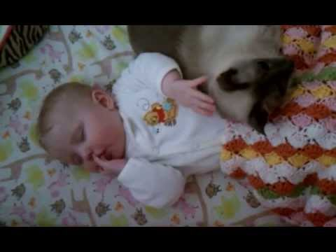 Baby With Cat In Crib Youtube