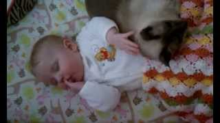 Baby With Cat In Crib