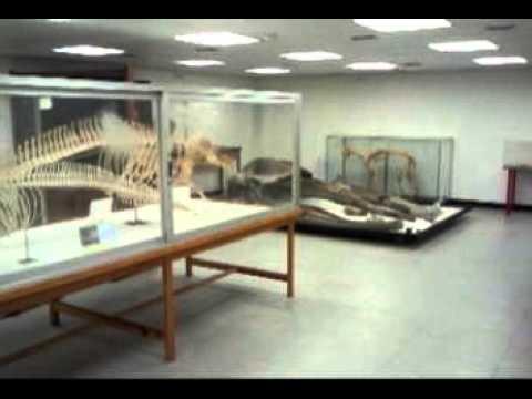 Reportaje: Museo de Anatomía Comparada de Vertebrados UCM - YouTube