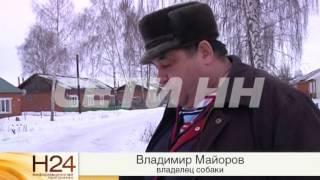 Отравленный смертельно опасным ядом снег появился в сотне мест Нижнего Новгорода