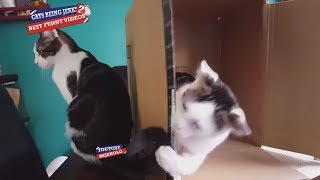Cats Being Jerks #2 Compilation 2018   Try Not To Laugh