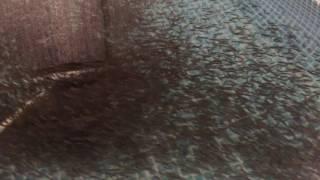 Малёк карпа в узв(Малёк карпа в узв Разведение рыбы. ООО «Проксима-С» рыбоводческая ферма в Украине по выращиванию клариево..., 2016-07-07T19:08:19.000Z)