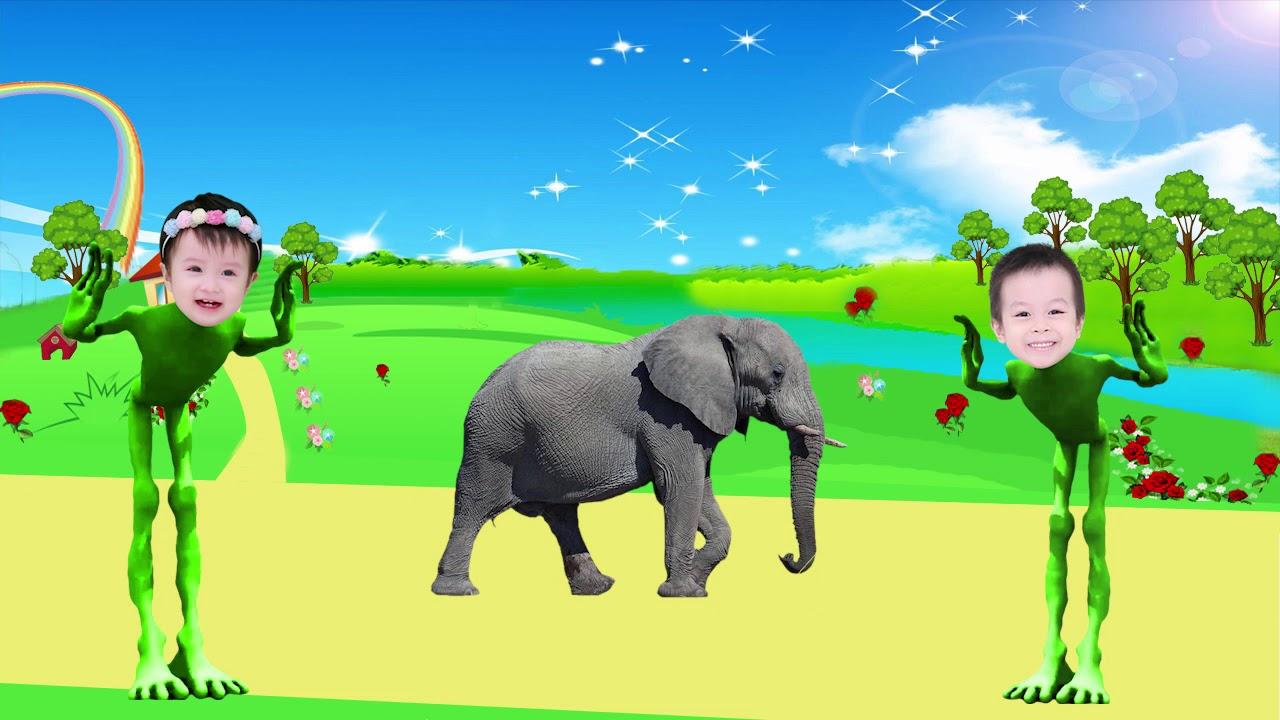 Belajar nama dan suara binatang ternak untuk anak ...